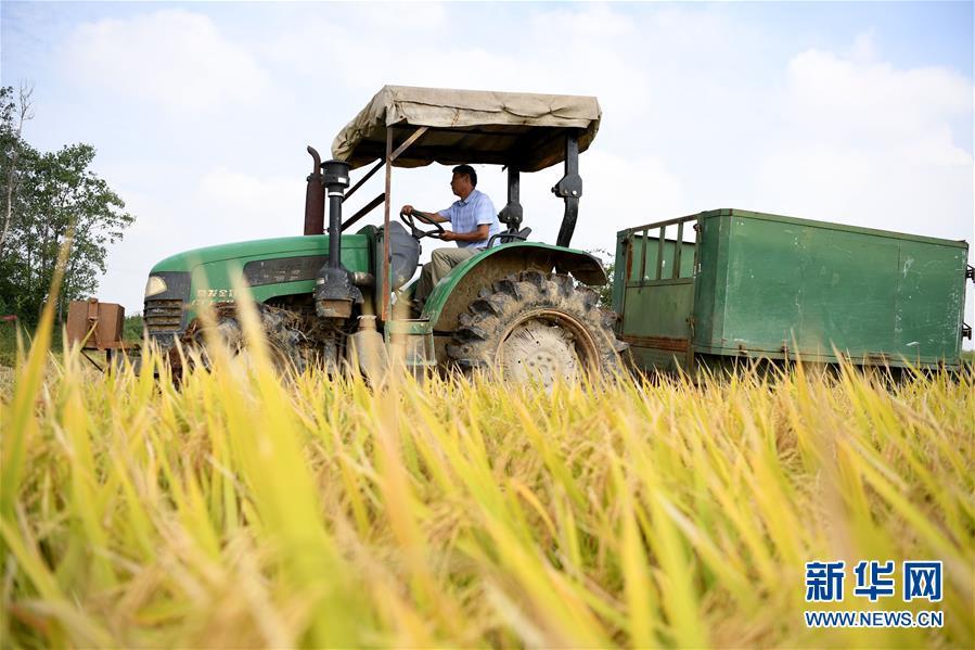 (新華全媒頭條·圖文互動)(7)希望灑在金色田野——寫在鄉村振興戰略實施一周年之際