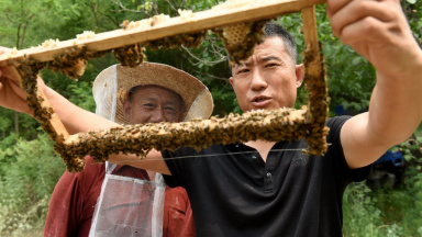 Beekeeping industry helps households get rid of poverty in Hebei